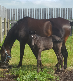 Loni and Foal